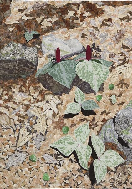 Appalachian Spring -Trillium by JoAnn Camp