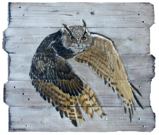 Keith Moore Eurasian Eagle-owl
