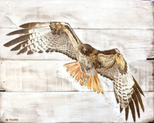 Keith Moore - Red tail hawk