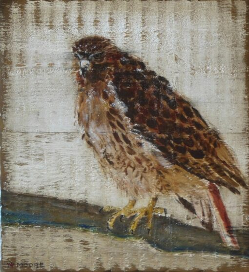 Keith Moore Red Tail Hawk 17x19